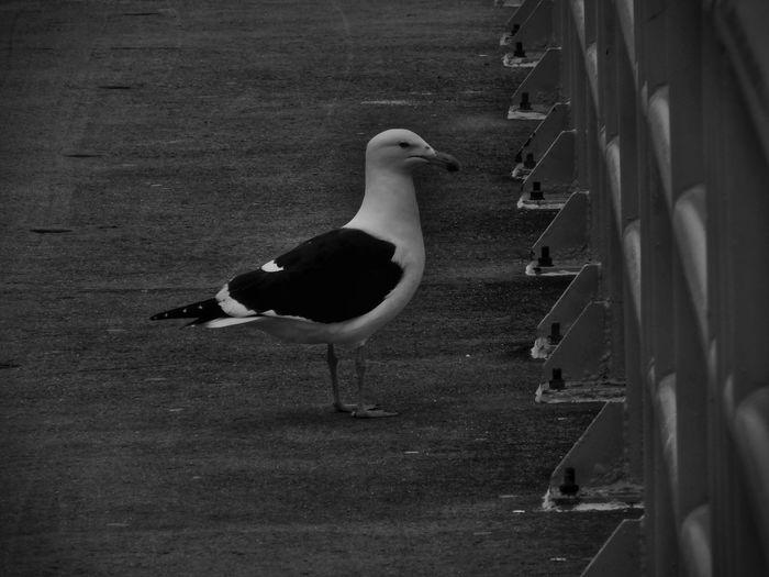 Animals Urban Nature Monochrome
