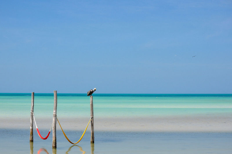 Bird perching on wooden post over sea against sky
