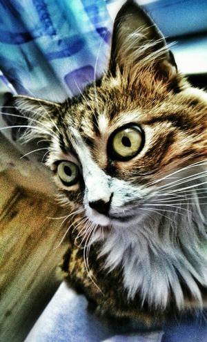 Are you really serius bro...!? Animals Pets Taking Photos TheMinimals (less Edit Juxt Photography) Shootermag Kyra Cat