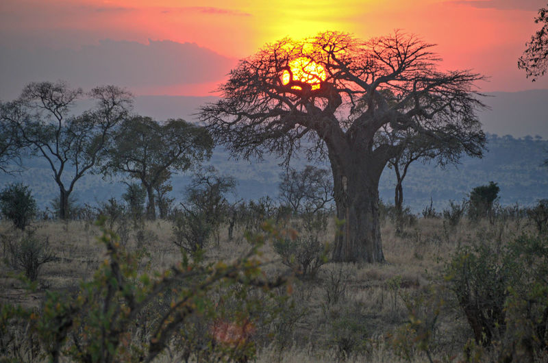 Sunset in Tanzania Jungle African Sunset Beauty In Nature Field Forest Grass Landscape Light Lion King  Lion King Suns Nature No People Non-urban Scene Outdoors Remote Scenics Tranquil Scene Tranquility Tree Tree Trunk