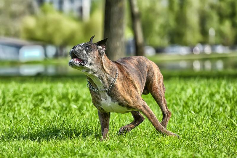 Dog looking away on land