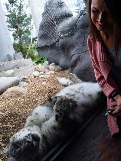 High angle view of woman standing by snow leopard at zoo