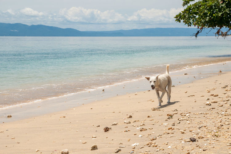 Dog standing on beach against sea