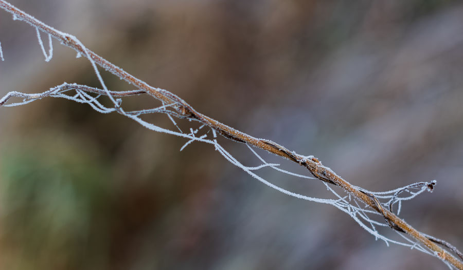 Close-up Focus On Foreground No People Plant Day Nature Twig Beauty In Nature Selective Focus Outdoors Cold Temperature Fragility Ice Growth Vulnerability  Dry Tree Winter Dead Plant Stick - Plant Part