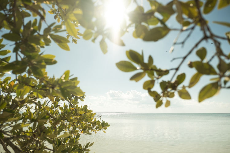 Caribbean Sea Mexico Nature Palm Tree Tranquility Beach Blue Sky Caribbean Holbox Horizon Horizon Over Water Island Landscape No People Paradise Peaceful Sea Water Waterfront