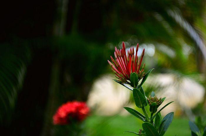 Flor Natureza Flowers Green Garden Nikon Nature Vacation Brasil