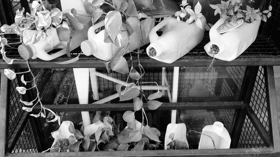 Milk Containers Recycling Recycled Plants Growing Plants Shop Nature Tiong Bahru Singapore