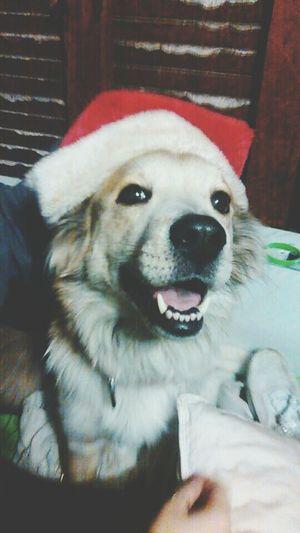 Ready for Christmas ?? Christmas Cute Pets