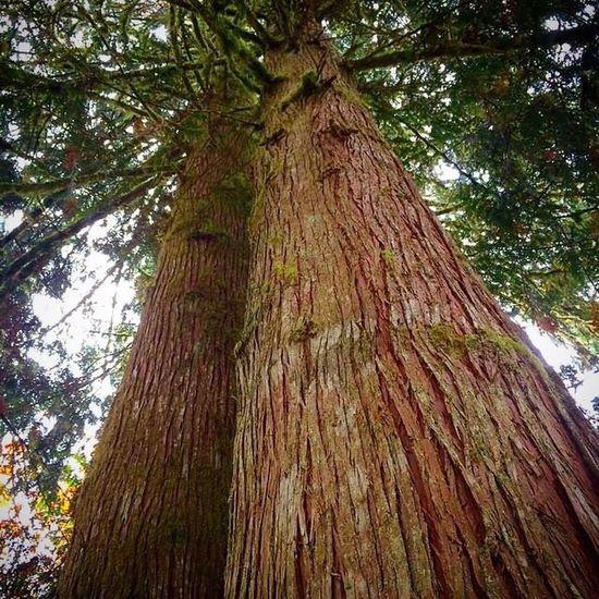 Hugging a very big tree. Hugging A Tree Nature Taking Photos Enjoying Life Washington State Pacific Northwest