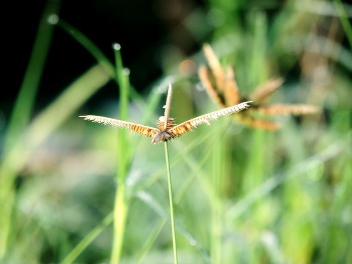 Grass Insect