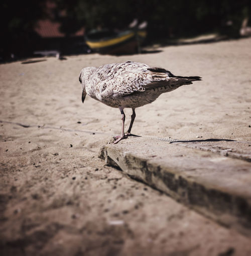 On the edge EyeEm Best Shots EyeEm Selects Sopot Beach Bird Perching Full Length Animal Themes Close-up