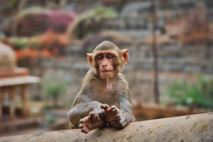 View of a monkey sitting on wall