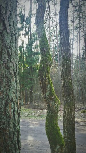 Hello World Hanging Out Enjoying Life Check This Out Pastel Colors Nature Lithuania Good Times Spring Trees EyeEm Gallery EyeEm Green Moss Lichen On A Tree The Odd One Forestwalk