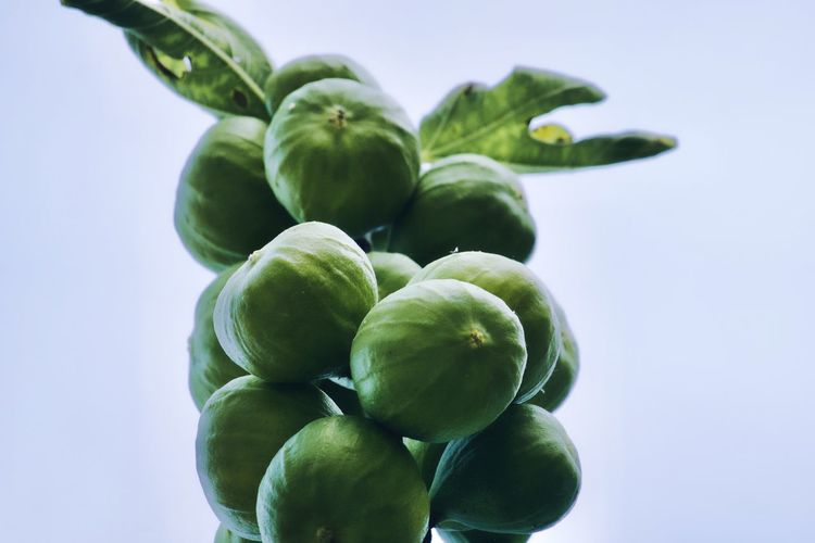 Close-up of fig fruits against white background