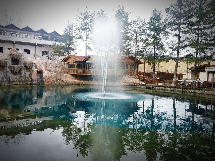 Lake Legend Nature Tree