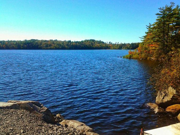 Water Lake Tree