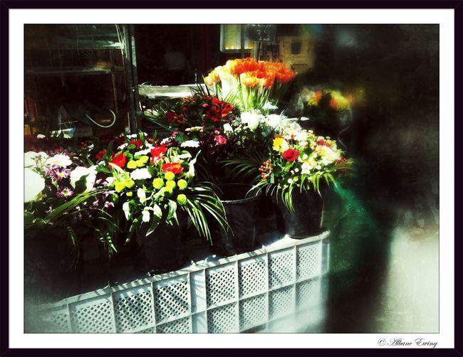 flowers at Versailles Flowers