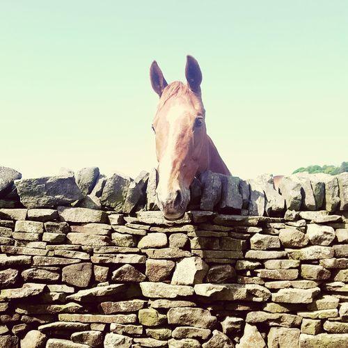 Horse against clear sky
