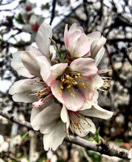 Flower Fragility Blossom Petal Beauty In Nature Growth Freshness Springtime Nature Botany Tree No People Day Twig Pollen