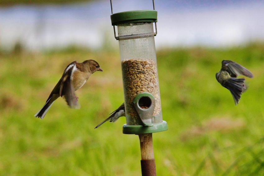 Bird Perching Bird Feeder Water Animal Themes Close-up