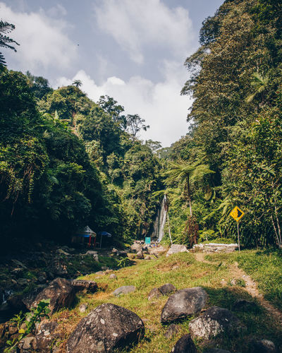 Beautiful Beautiful Nature Good Day Land Natural Nature Cheerful Fauna Flora Flora And Fauna Foreground Forest Jungle Landscape Nature_collection No People Outdoors Saturated Scene Scenery