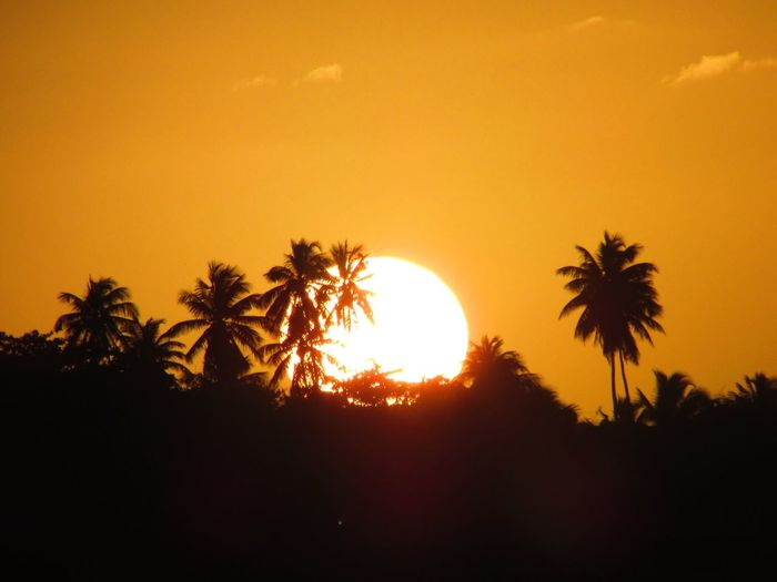 -/•{ F Λ Γ Λ Ψ Λ Υ }•\- Nature_collection Sunset The Purist (no Edit, No Filter) Nature Orange Palm Trees Silhouette Colors Trees Sun