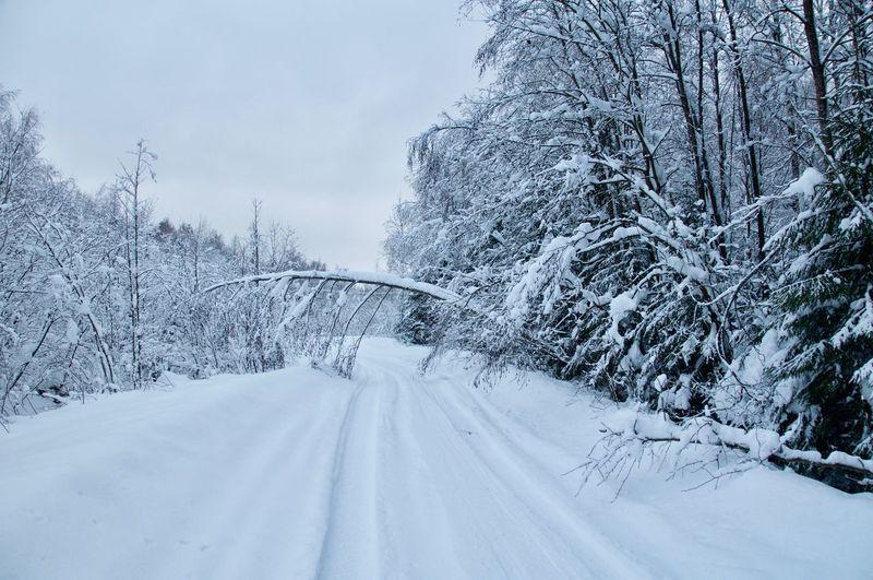 russia winter Tree Snowing Snow Cold Temperature Winter Snowflake Forest Polar Climate Road Snowdrift Ski Track