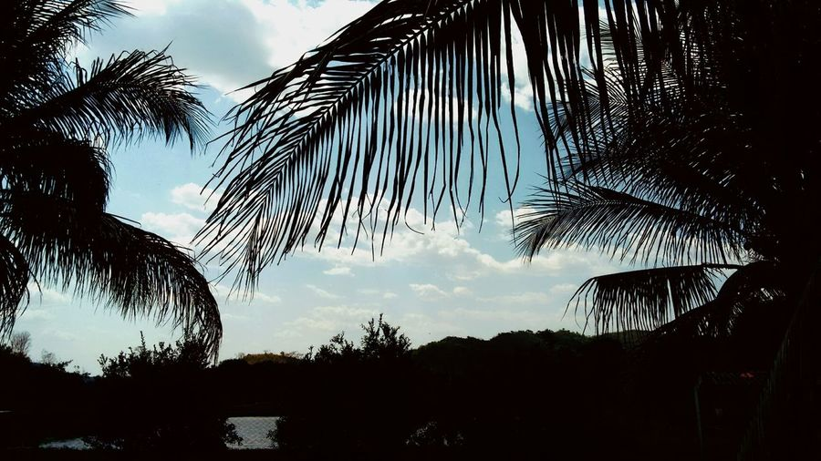 Beauty In Nature Branch Cloud - Sky Day Growth Low Angle View Nature No People Outdoors Palm Frond Palm Tree Scenics Silhouette Sky Sunset Tranquil Scene Tranquility Tree Tree Trunk