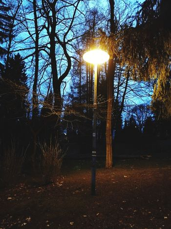 Tree Lens Flare Night Light Beam Illuminated Tranquility No People Tree Trunk Outdoors Nature Beauty In Nature Sky Growth Forest Grass Scenics