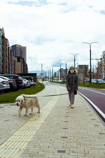 Rear view of dog walking in city