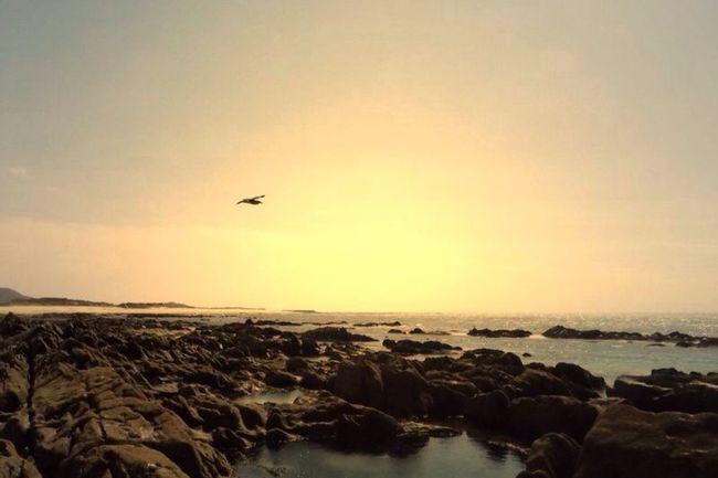 Amorosa 2015  Portugal Beach