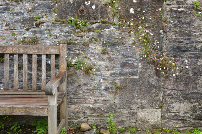 Bench Benches Brick Brick Wall Bricks Bricks And Mortar Cottage Cottage Country Cottage Life Cottages Daisies Daisy Flower Wall Flowers Garden Wall Mortar Nature No People Outdoors Rock Rocks Rustic Stone Stone Wall Wooden Bench