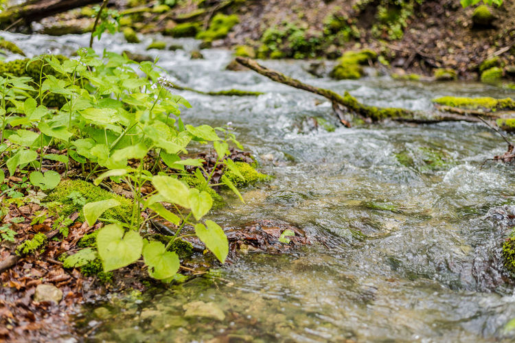 Beauty In Nature Close-up Day Fresh Freshness Growth Leaf Nature No People Outdoors Plant Plants Found In Rivers And Streams Plants That Live In Rivers Tranquility Water Water Flowing Waterfront