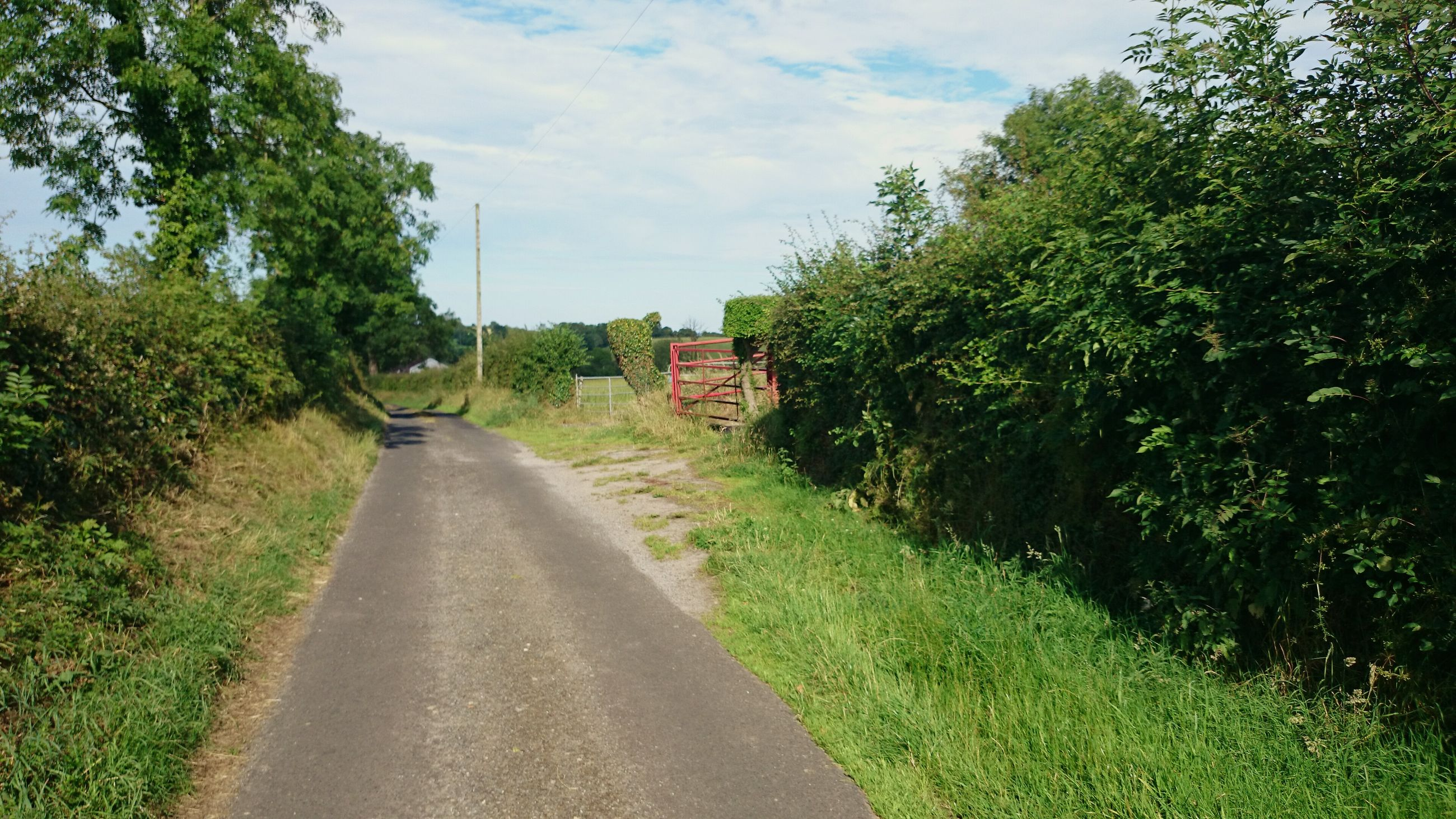the way forward, tree, grass, diminishing perspective, sky, vanishing point, green color, growth, building exterior, footpath, built structure, architecture, dirt road, pathway, walkway, plant, road, transportation, nature, tranquility