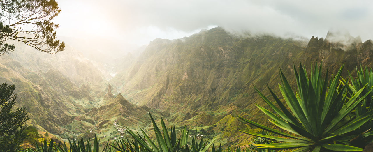 Yucca plants and rocky mountains in Xoxo valley in Santo Antao island, Cape Verde. Panoramic shot. Cape Verde Yucca Agave Plant Beauty In Nature Canyon Cloud - Sky Coniferous Tree Day Environment Fog Land Landscape Mountain Mountain Range Nature No People Non-urban Scene Outdoors Pine Tree Plant Rain Scenics - Nature Sky Tranquility Valley