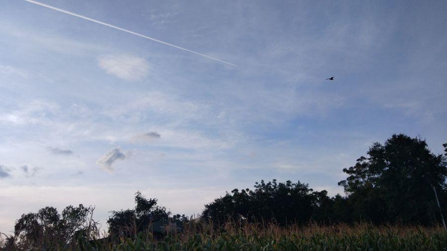 Bird flying over field against sky