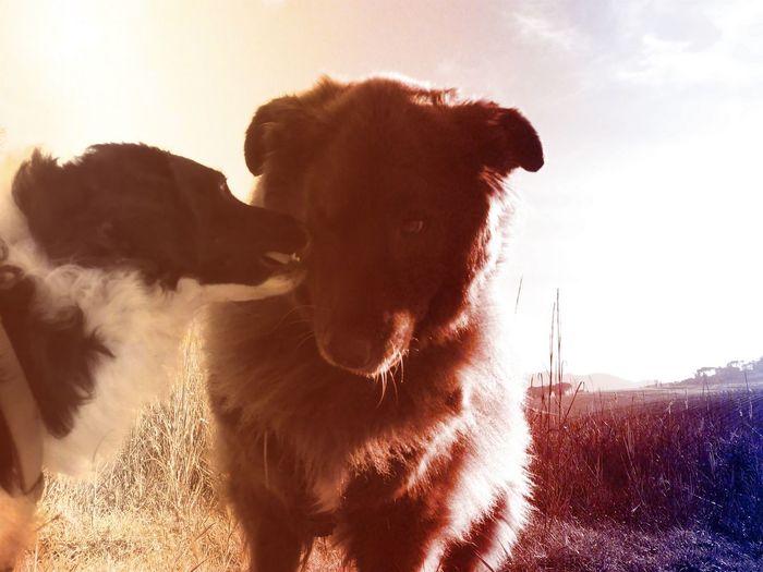 Peace Love Serenity Amicizia Friends Friendship Lunina Cani Nuvi EyeEm Selects Dog Animal Pets Domestic Animals Mammal No People Outdoors Nature Close-up Animal Themes
