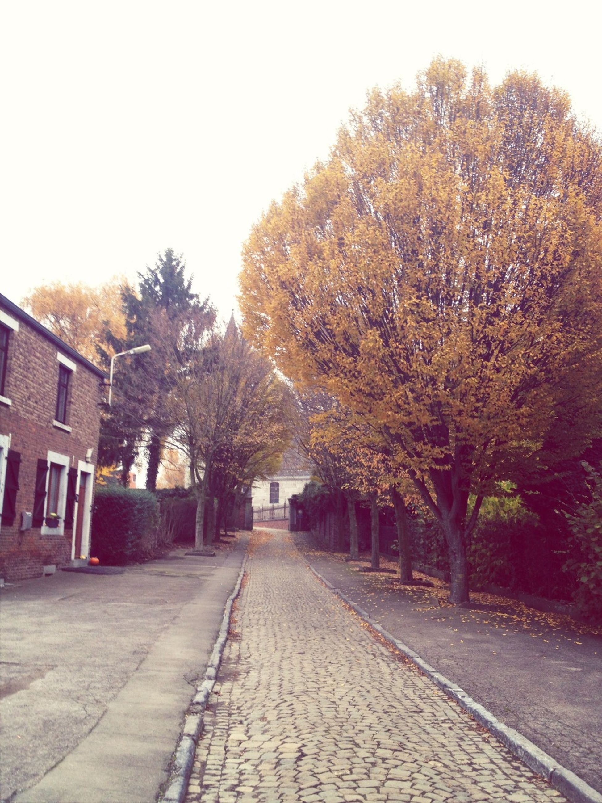 tree, the way forward, building exterior, architecture, built structure, street, transportation, clear sky, diminishing perspective, road, autumn, sky, house, footpath, day, bare tree, vanishing point, season, outdoors, cobblestone