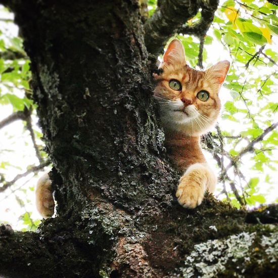 Domestic Cat Feline Pets Animal Themes Domestic Animals One Animal Tree Mammal Looking At Camera Tree Trunk Portrait Outdoors Nature Close-up Enjoying Life Lifestyles Nature Love Like Pet Portraits