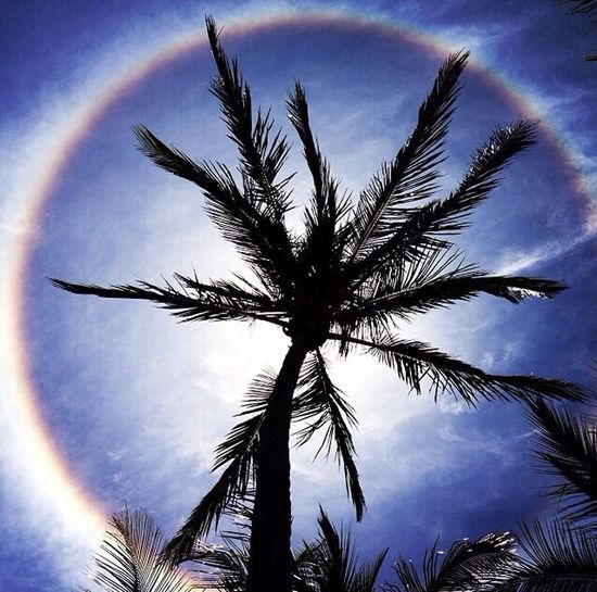 Look Up And Thrive Sunhalo Palmtree Digitalghosts