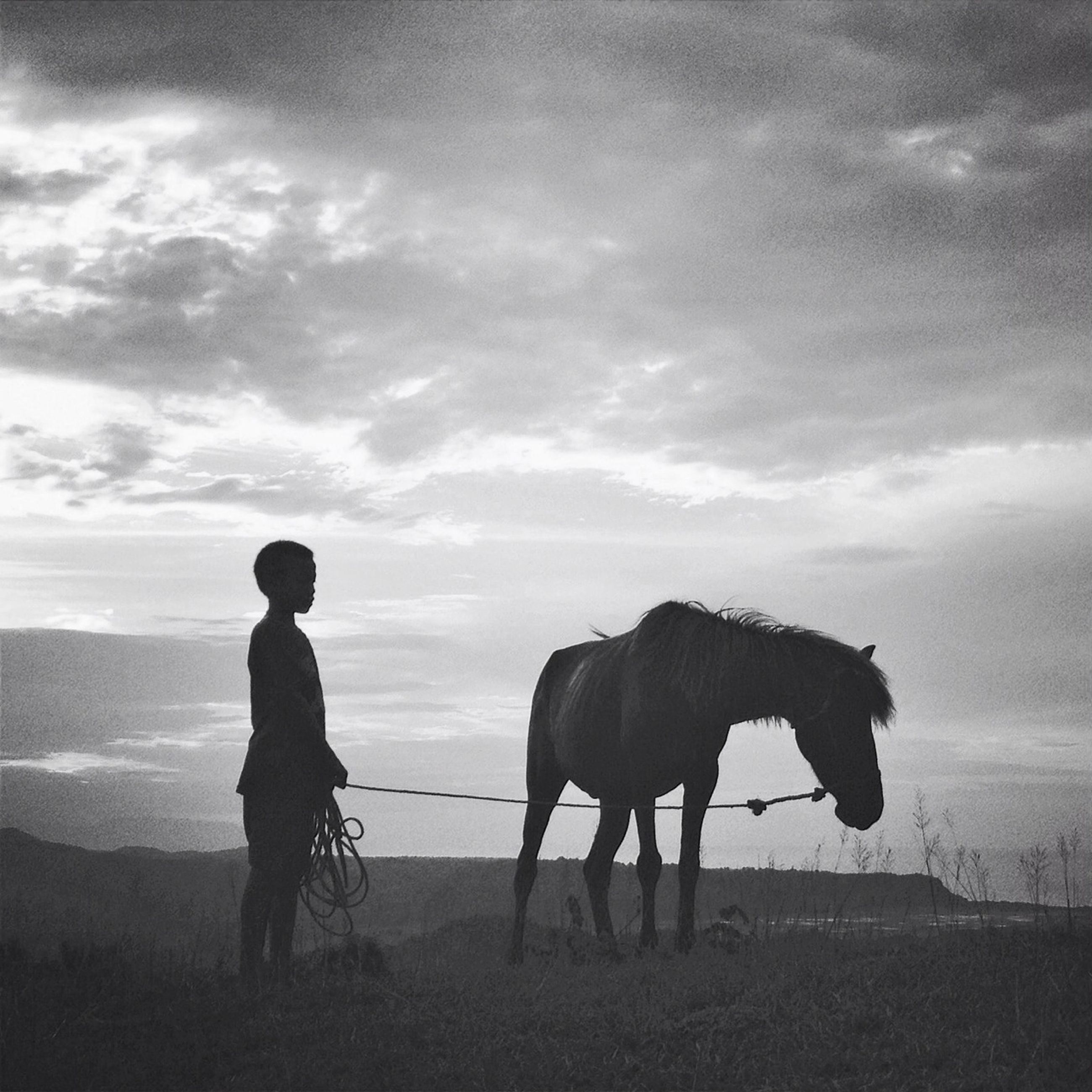 sky, animal themes, domestic animals, sea, beach, standing, mammal, water, horizon over water, cloud - sky, full length, rear view, nature, walking, tranquil scene, one animal, shore, horse, tranquility, togetherness