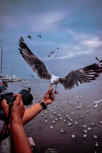 Human Hand Hand Flying Real People Vertebrate Bird Animals In The Wild Human Body Part Animal Wildlife One Person Spread Wings Lifestyles Holding Leisure Activity Nature Feeding  Eating Body Part Seagull Finger Outdoors Animal Wing