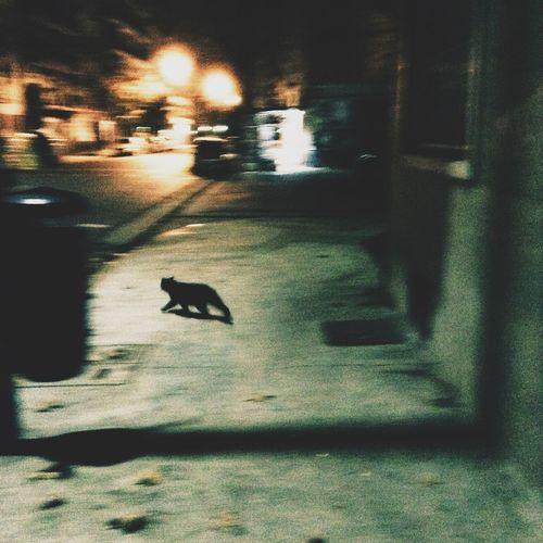 Snapshots Of Life Nightphotography Cat Haruki Murakami Pantone Green The Street Photographer - 2015 EyeEm Awards