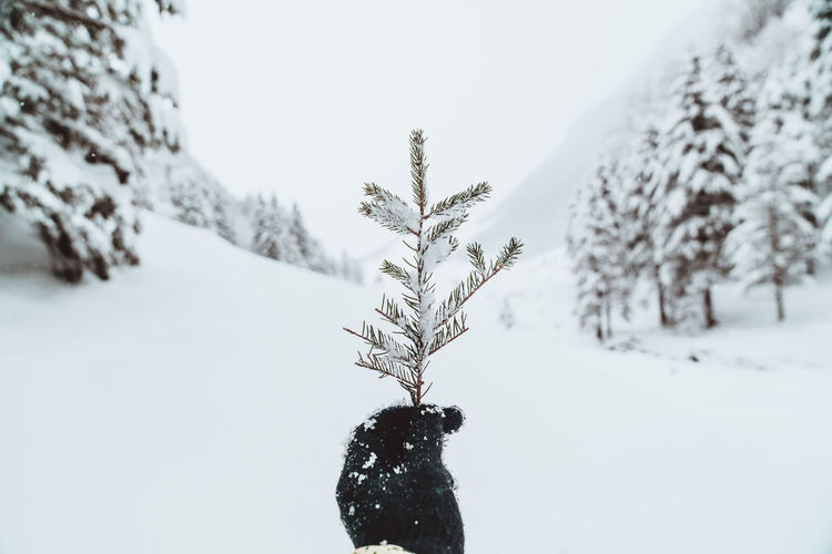 Snow Winter Cold Temperature Plant Nature Tree Day Land Beauty In Nature Field Covering Tranquility White Color No People Sky Focus On Foreground Outdoors Frozen Scenics - Nature Extreme Weather Warm Clothing