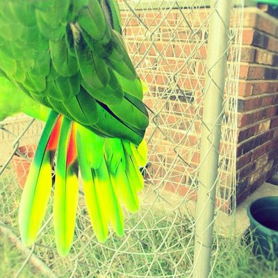 April 2nd: Colors! Love his feathers. Parrot Photoadayapril Coolcolors Green Red Pretty Cool Brightcolors Bright