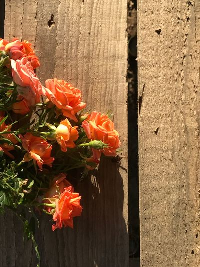 Flower Orange Color Beauty In Nature No People Outdoors Freshness Day Nature Petal Fragility Plant Flower Head Growth Sunlight Close-up Blooming