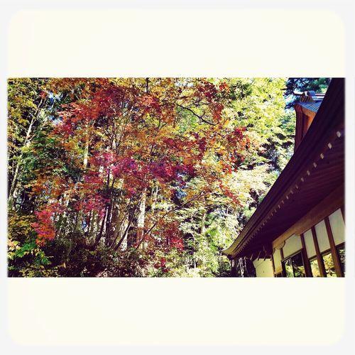 戸隠 Autumn Nature Togakushi Shrine
