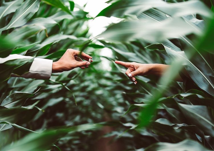 Cropped Image Of Man Giving Ring To Woman Amidst Plants