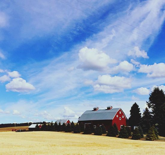Red barn Wheat Field Blue Sky And White Clouds Farmland Farm Scene