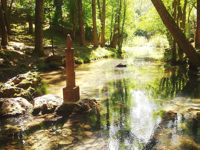 Fontibre Ebro Born Txusty Tree Water Shadow